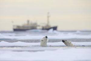 polar-bears-shutterstock